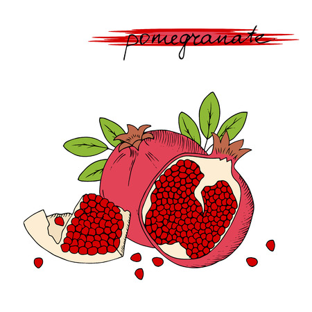 palatable: Hand drawn pomegranate with leaves isolated on white background. Vector illustration. Illustration