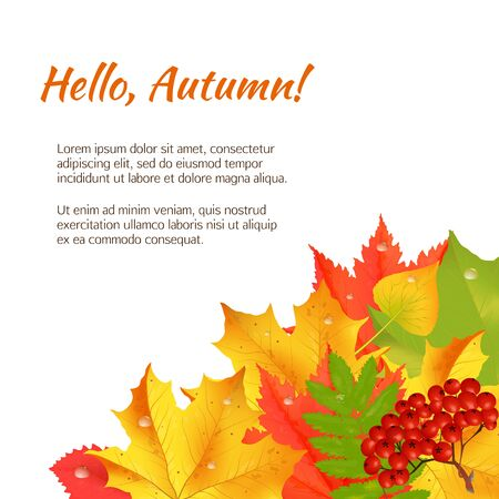Autumn orange, red, green maple leaves and rowan laying in the corner on white background.