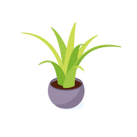Green cactus in pot isometric - potted houseplant for interior decoration. 일러스트