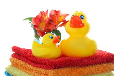 baby ducks: Mom and Baby Ducks Stock Photo