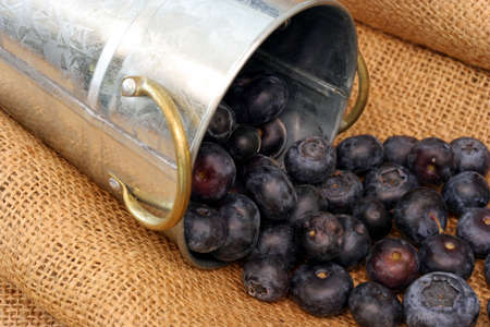 tumbling: Blueberries Tumbling out of Bucket