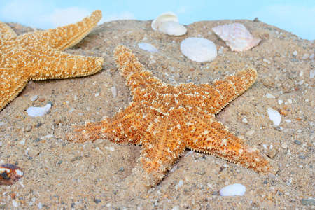 Two starfish going uphill on a sandy beach with shell scattered around. photo