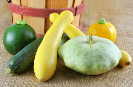 patty: Assorted summer squash on burlap which includes green and yellow zucchini, globe, and patty pan squash  Stock Photo