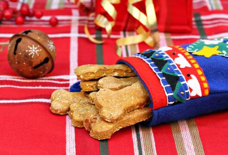 perro comiendo: Calabaza casera, galletas de perro tocino en una media de Navidad hecho a mano. Regalo de Navidad para el perro. Foto de archivo
