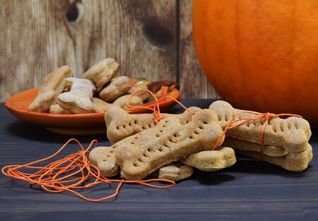 Homemade bone shaped pumpkin dog cookies being wrapped in orange twine.  Pumpkin in background.