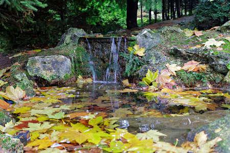 zero gravity: Caduta foglie galleggianti in un ruscello fresco