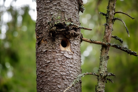 Hole in Tree trunk (Bird nest) photo