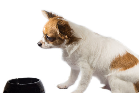 pappy: Pappy dog look at empty bowl