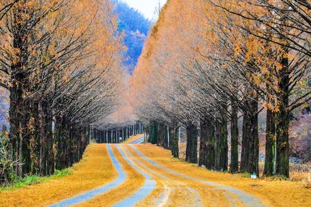 meta: Jeonbuk Jinan meta Shwe Choir road