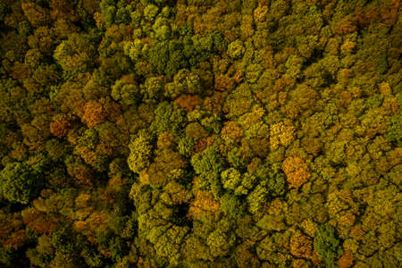 Aerial photography with drone autumn colorful forest.