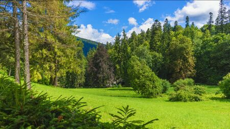 Carpathian forest hillside with a beautiful park and evergreen conifers, Romania.