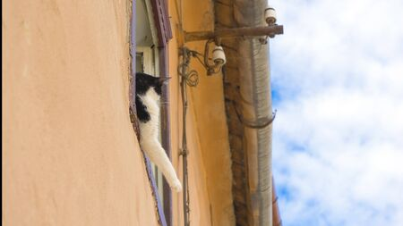 The cat lies stretching its paws, sleeping on the windowsill, an old house, against the sky Stock Photo