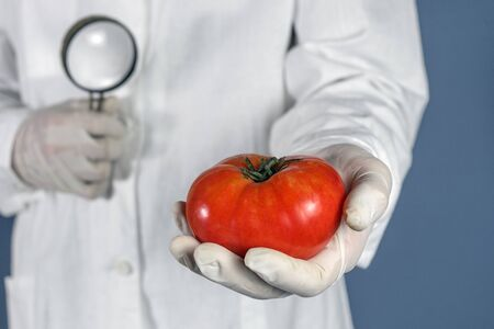 GMO scientist looks at red tomato through magnifying glass - genetically modified food concept. Reklamní fotografie