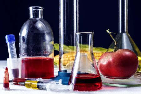 Tomatoes, syringe, test tubes in laboratory on table. Genetically modified food conception