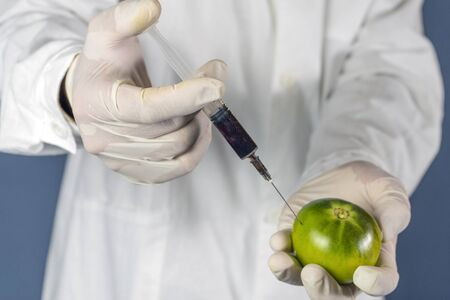 laboratory assistant injects into a green tomato with nitrates so that they are fresh, GMOs