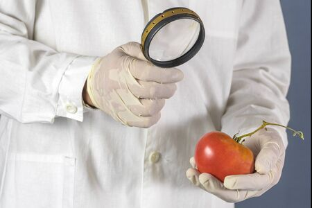 GMO scientist looks at red tomato through magnifying glass - genetically modified food concept. Banco de Imagens