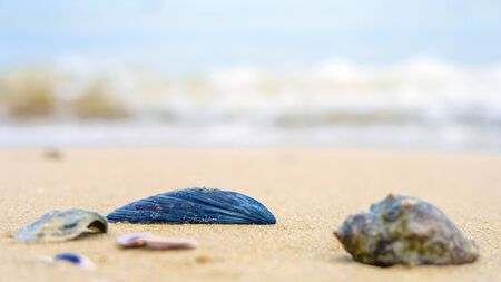Beach concept. Sea shell with sea on background Stock fotó