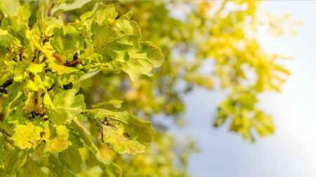 Autumn green and yellow leaves. Autumn scenic landscape.