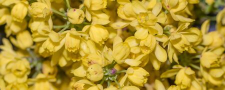 Photo the yellow Flowers -Background with the Flowers