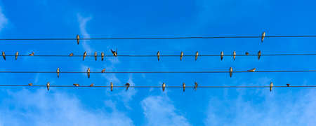 Photo swallows sit on wires against the background of the blue sky
