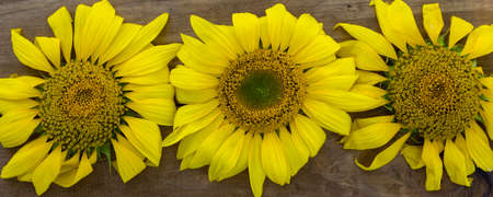Close up of yellow sunflowers on wooden background, harvest and summer concept Banque d'images