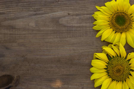 Yellow sunflowers on wooden background, close up, copy space.