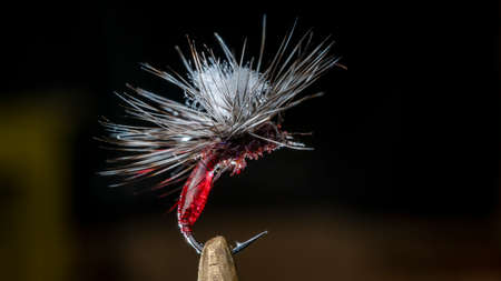 Photo Imitation of a bloodshot mosquito. Handmade fishing fly tied close-up on a dark background. Foto de archivo