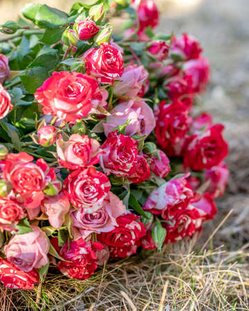 Photo pink and white rose flowers on a natural background