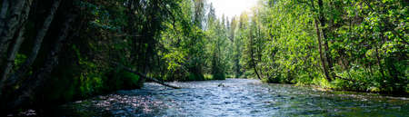 River in the forest taiga. Panoramic view of nature, summer day.