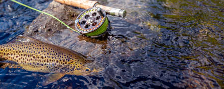Beautiful brook trout caught during fly fishing.