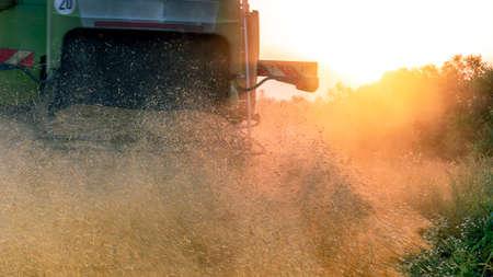 Working Harvesting Combine in the Field of Wheat. Setting sun rays on horizon in rural meadow. Rich harvest. Foto de archivo
