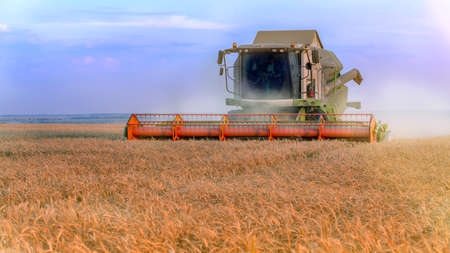 Working Harvesting Combine in the Field of Wheat. Rich harvest. Foto de archivo