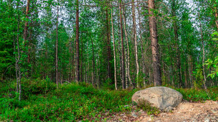 Photo Scenic forest landscape with big stone with green grasses among thickets and trees. Vivid scenery with large boulder.
