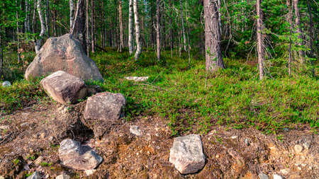 Photo Scenic forest landscape with big stone with green grasses among thickets and trees. Vivid scenery with large boulders. Foto de archivo