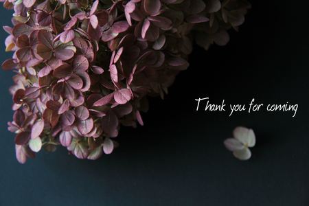 Purple Hydrangea On Black Background with Thank You for Coming Sign Wedding Фото со стока