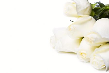 Rose bianche isolate su sfondo bianco