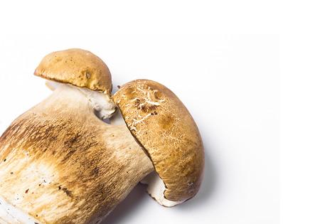 cep: big mushroom cep isolated on white background