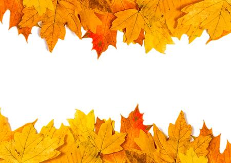 Grens van gekleurde vallende maple leafs met kopie ruimte op witte achtergrond Stockfoto