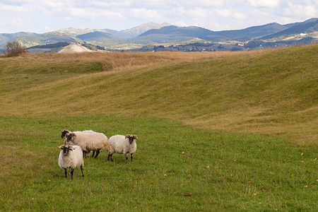arable land: The shepherds took the sheep to their spring pasture. Arable land and beautiful meadows in the early spring. Stock Photo
