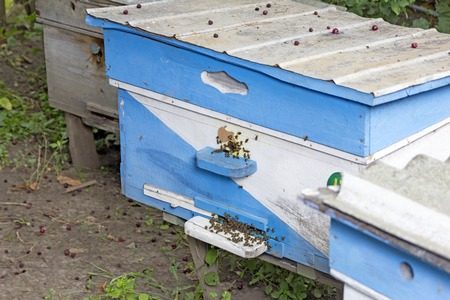 bee apiaryseveral bee houses in spring sunset time