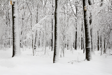 Snow covered trees in the forest in winter