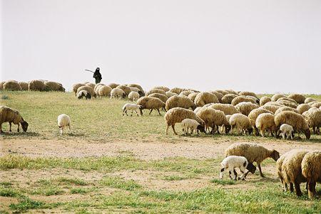 negev: Bedouin shepherd