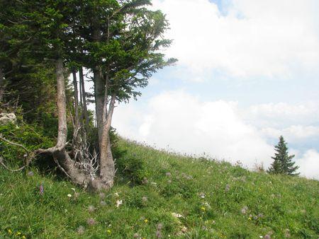 alpes: Alpes mountains