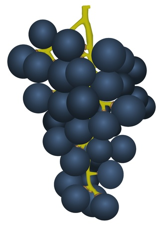 raceme: Bunch of ripe grapes on white background Illustration