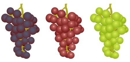 Illustration three bunches of grapes of different grades on a white background Vector