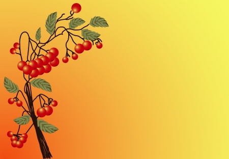 raceme: Illustration of ripe red Rowan twigs with leaves on a yellow-orange background