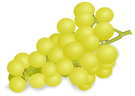 raceme: Illustration of a ripe bunch of white grapes on a white background