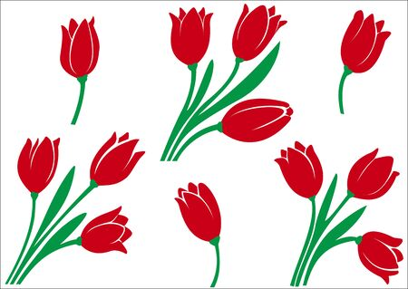 Illustration of a diverse set of tulips on a white background