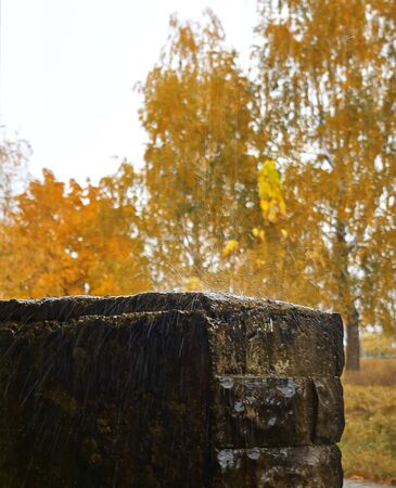 yellowed: Overcast rainy autumn day and yellowed trees