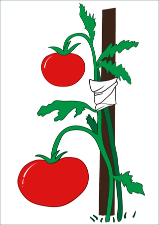 Illustration of a bush of ripe tomatoes with a peg on a white background